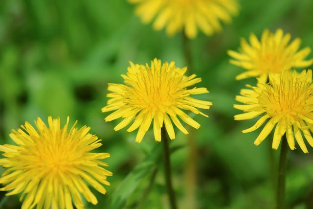 flower_beiz.jp_S08650