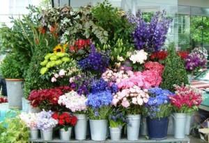 Flower_Shop_Main_Image_2-500x344